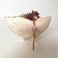 Porcelain sempervivum garden