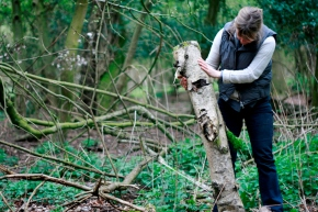 Bark Collecting Photo by Paul Tupman (1)