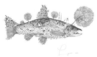 Doodle Trout