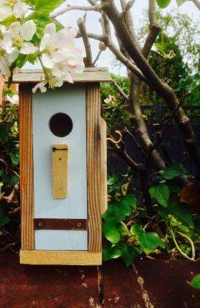 the green woodpecker, birdbox copy